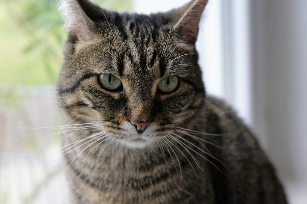 Los gatos aún cuando están felices tienen un rostro serio