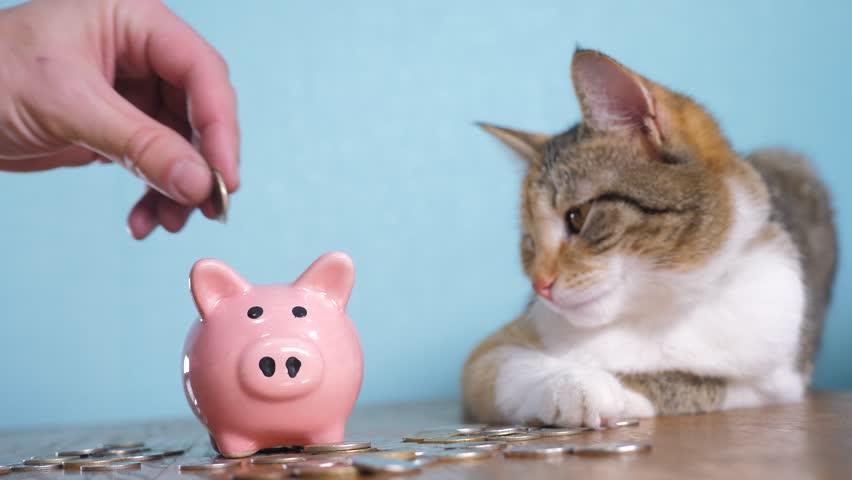 Debes ahorrar para poder pagar el costo de la esterilización de tu gata