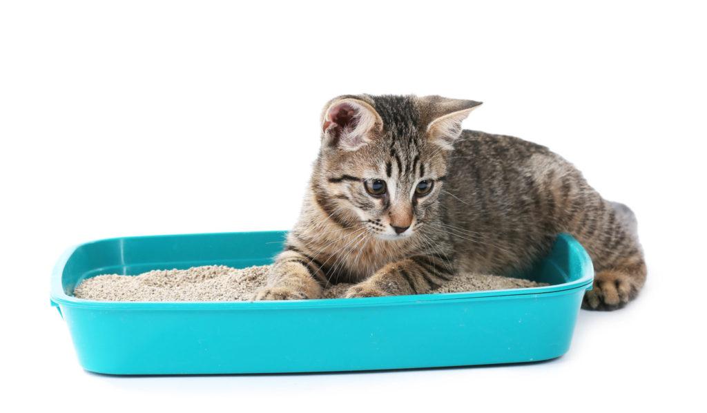 Puedes utilizar alternativas en lugar de utilizar arena para gato