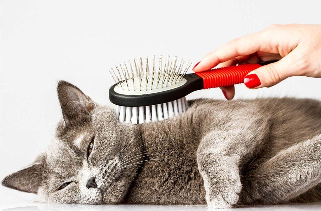Gato relajado recibiendo un rico cepillado