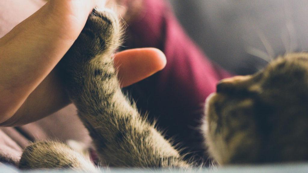 Pata de gato pequeño con mano de persona