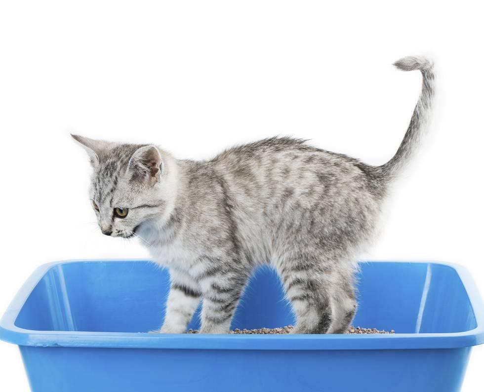 El arenero de los gatos debe ser limpiado constantemente