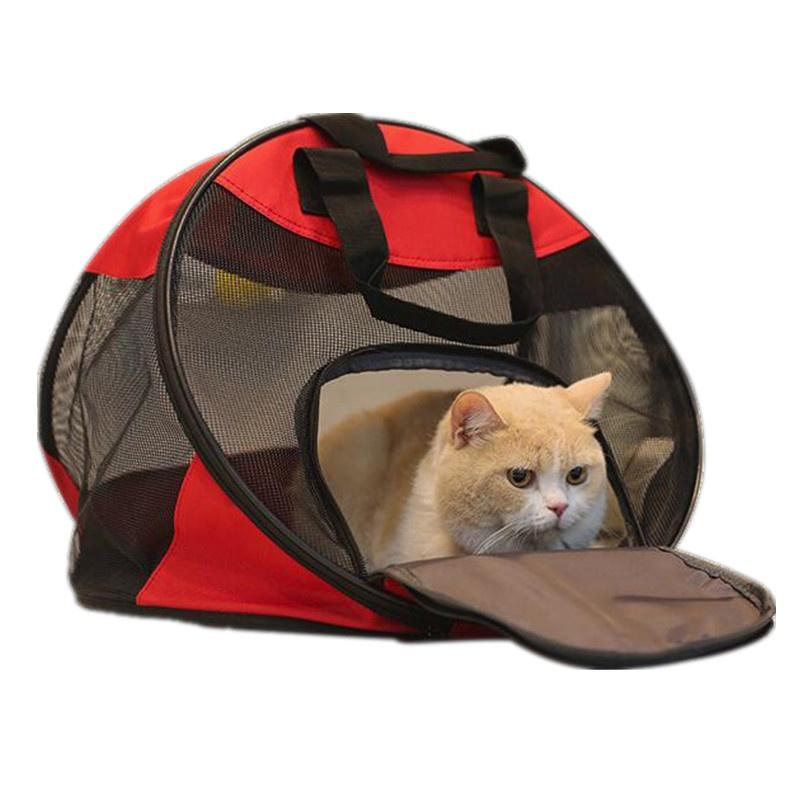 Gato en su transportadora