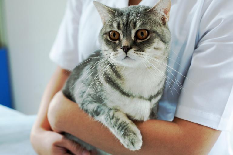 Gato en brazos del veterinario