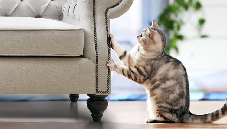 Gato afilándose las uñas en los muebles de la sala