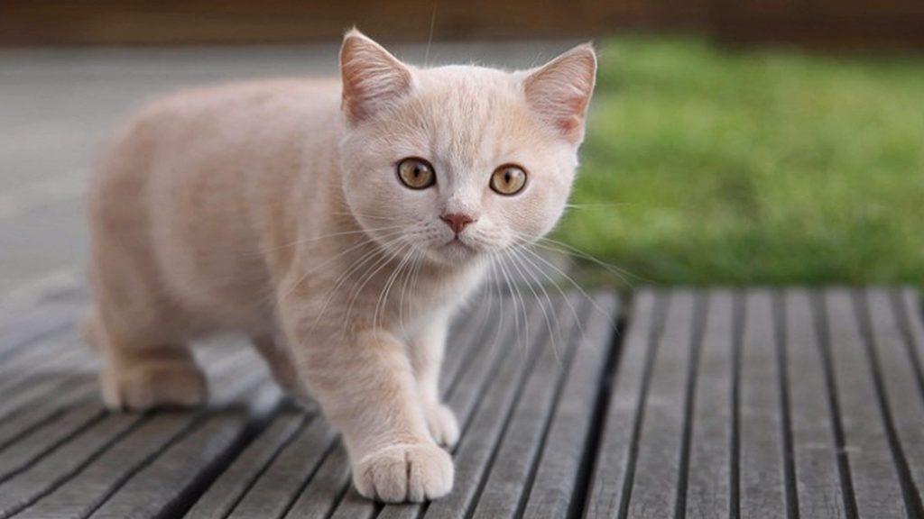 Gato pequeño en estado saludable