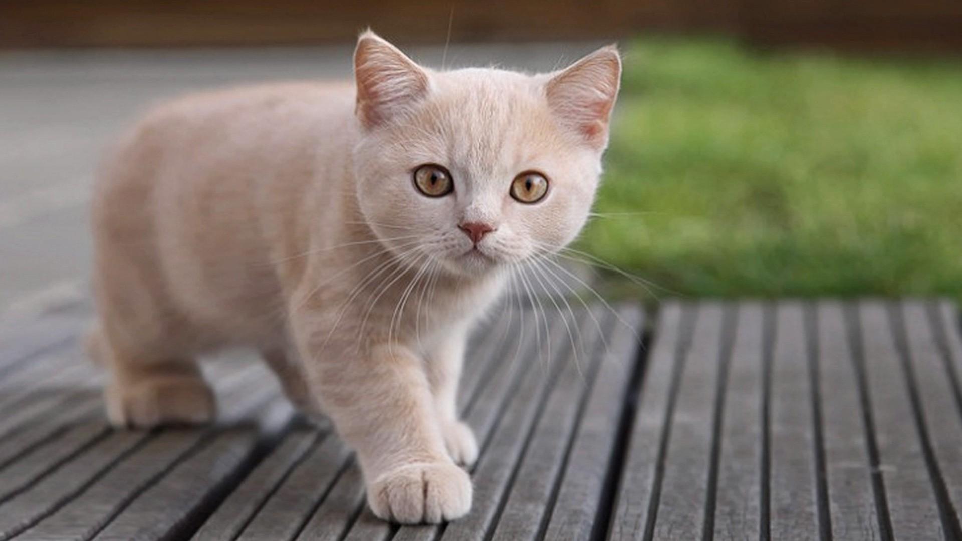Consejos para cuidar a un gato