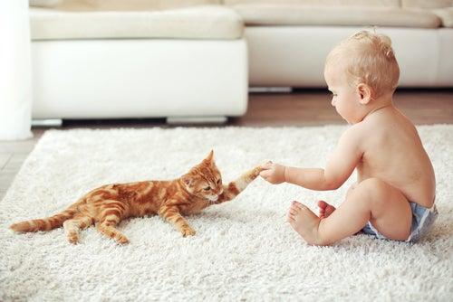 Gato pequeño con un bebé humano