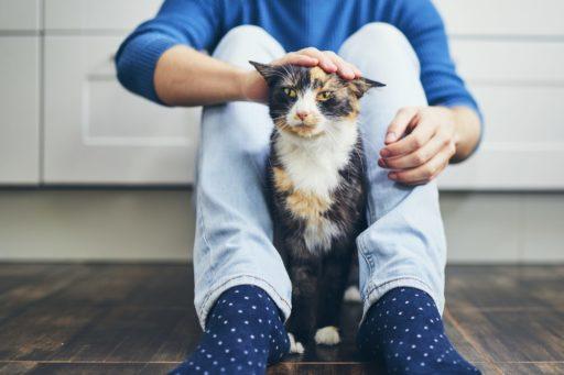 Los gatos disfrutan las caricias