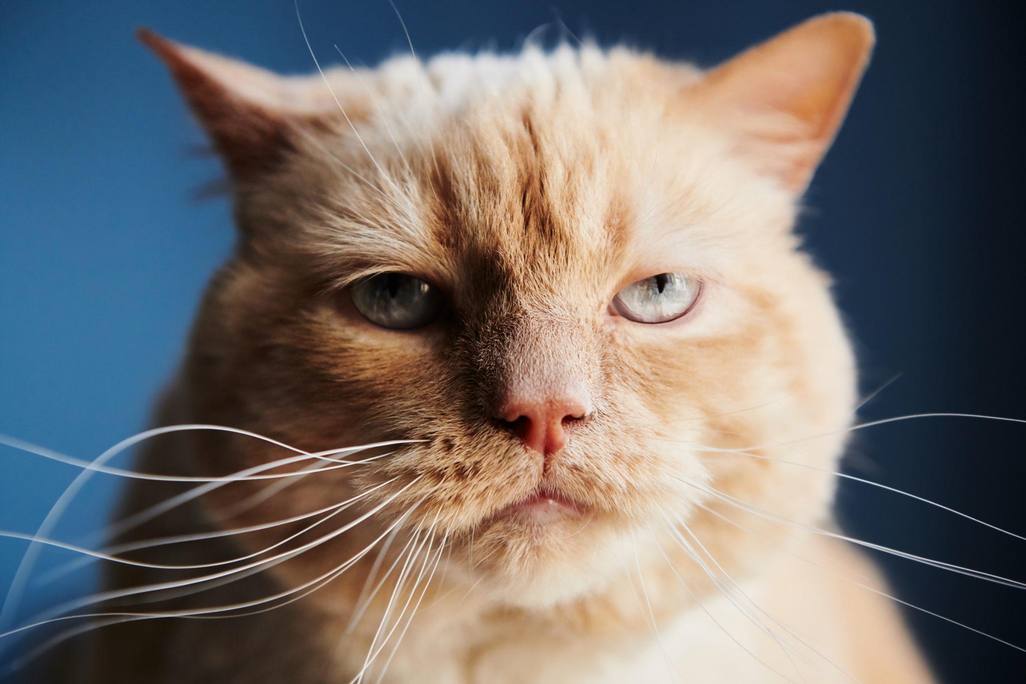 Bigotes blancos de gato