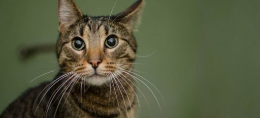 Gato con bigotes largos