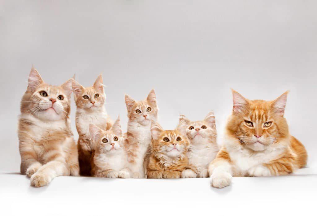 Grupo de Gatos