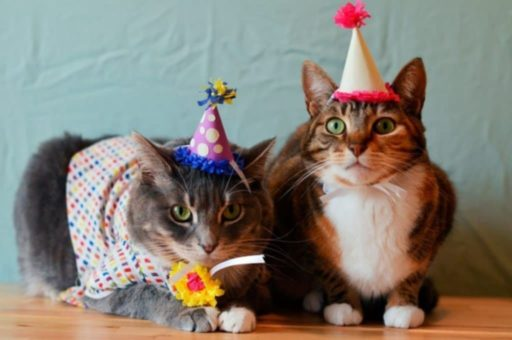 gatos celebrando dia internacional del gato