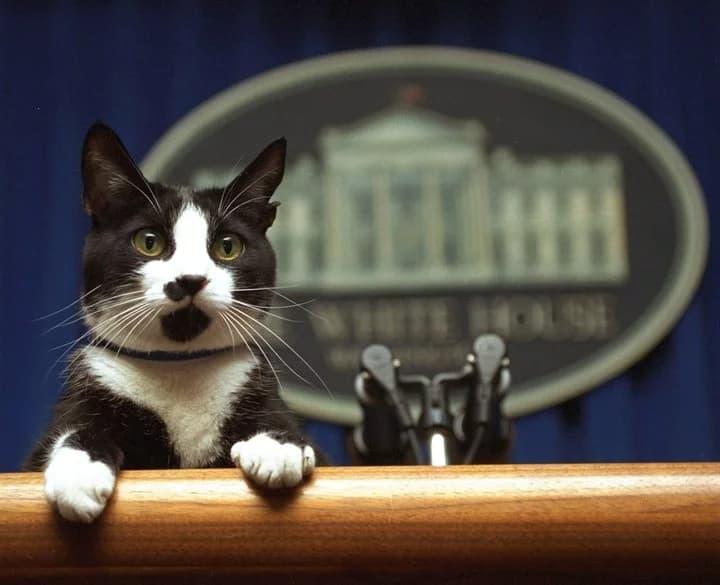 Día Internacional o mundial del gato