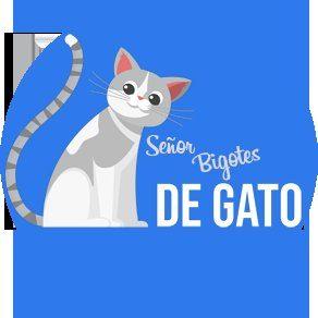 Sr. Bigotes de Gato
